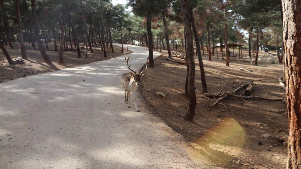 hayvanat bahçesi gaziantep gezilecek yerler