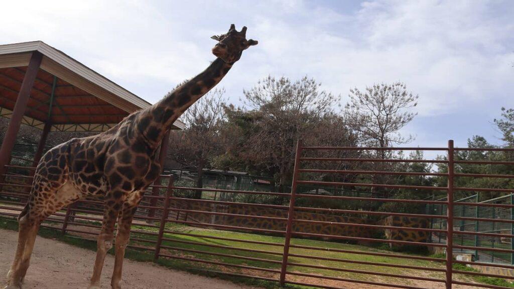 Gaziantep Merkez Gezilecek Yerler hayvanat bahçesi